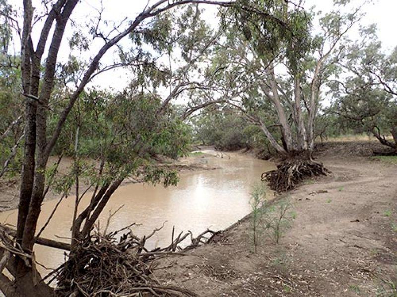 Lower Balonne River, Queensland