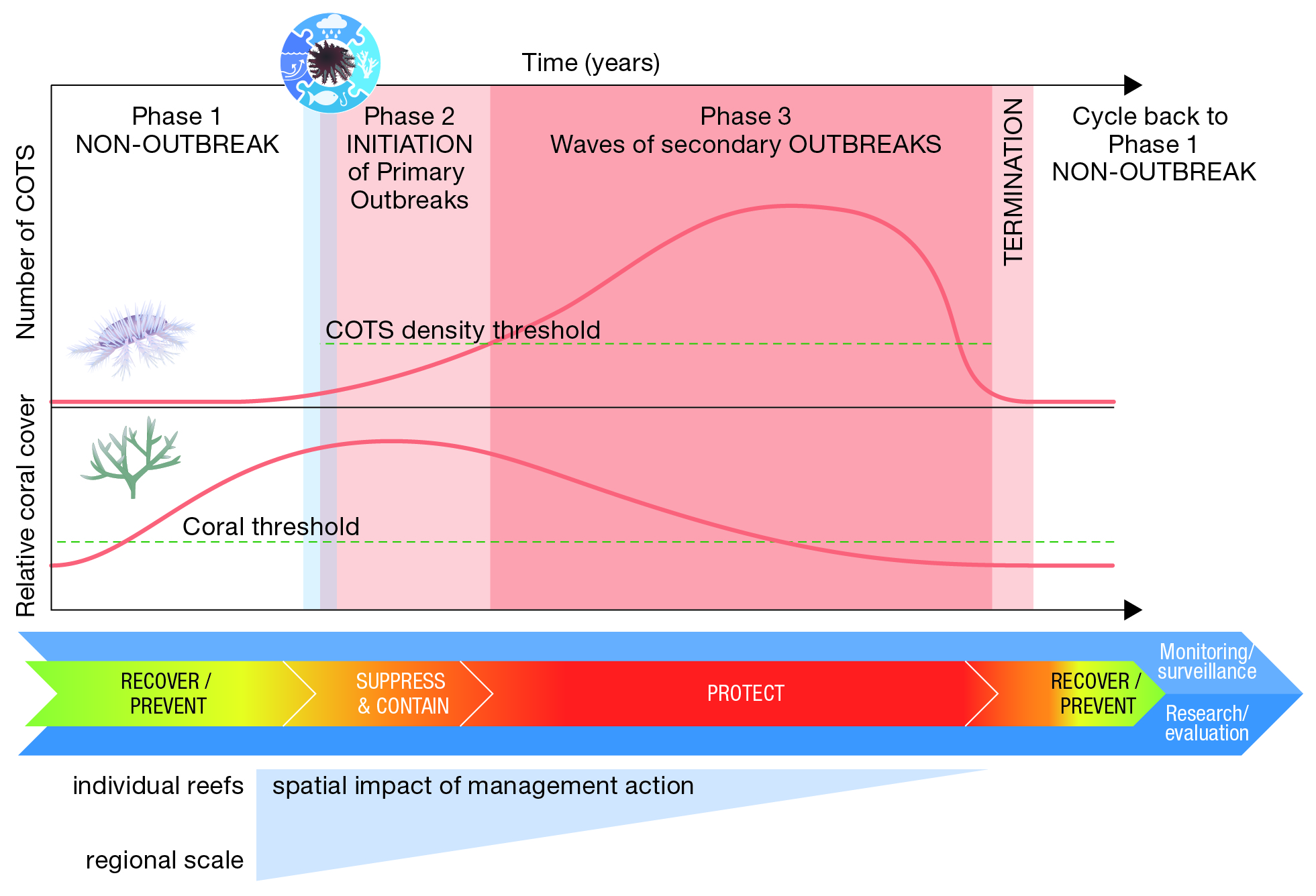 Crown-of-thorns starfish (COTS) outbreak cycle and the associated stages of management action